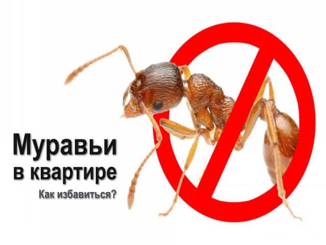 Как победить домашних муравьев